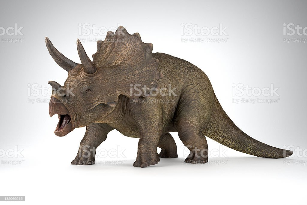 Lone gray triceratops standing on a white surface stock photo