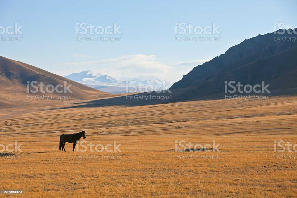 Lone horse on a background of mountains and pastures stock photo
