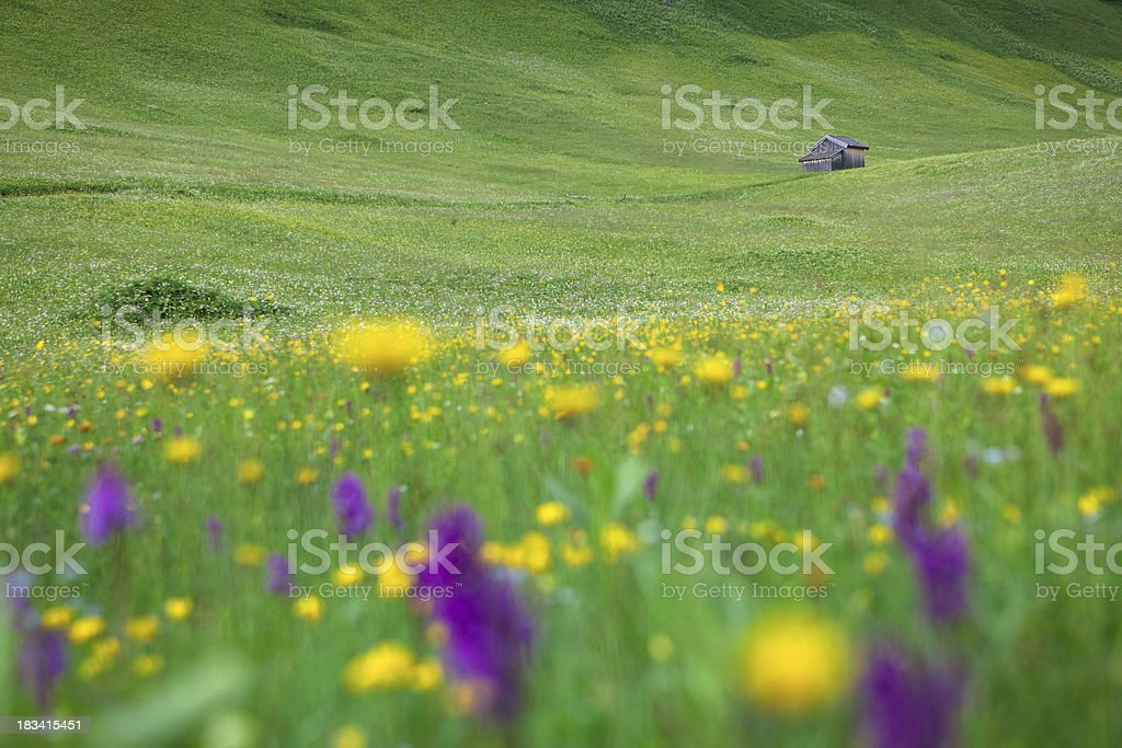 lone hut with defocused meadow in foreground, tirol, austria stock photo