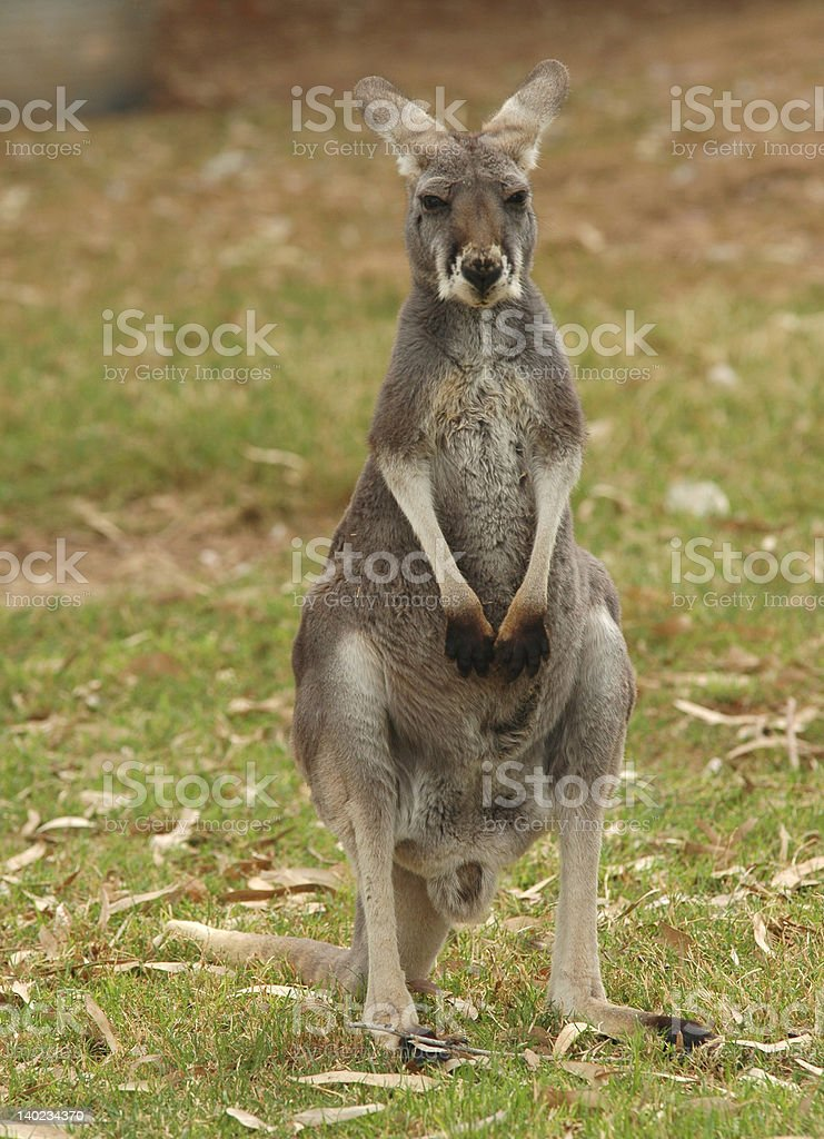 Lone Jumper royalty-free stock photo