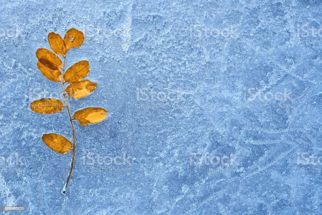 Lone Leaf on a Frozen Minnesota Lake stock photo