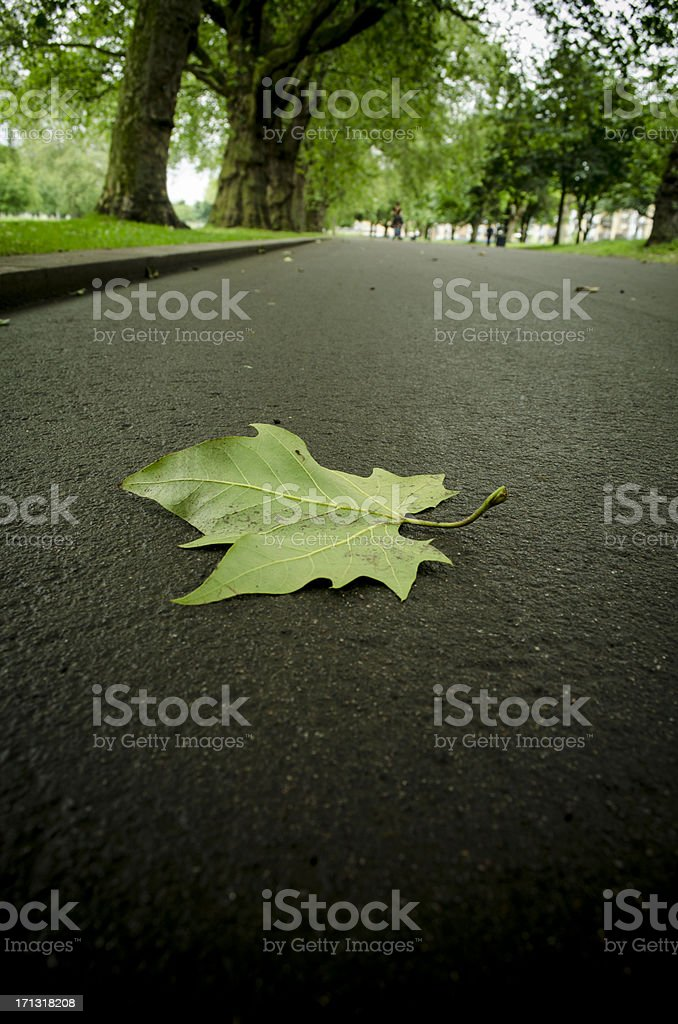 lone leaf on road at Victoria Park east london stock photo