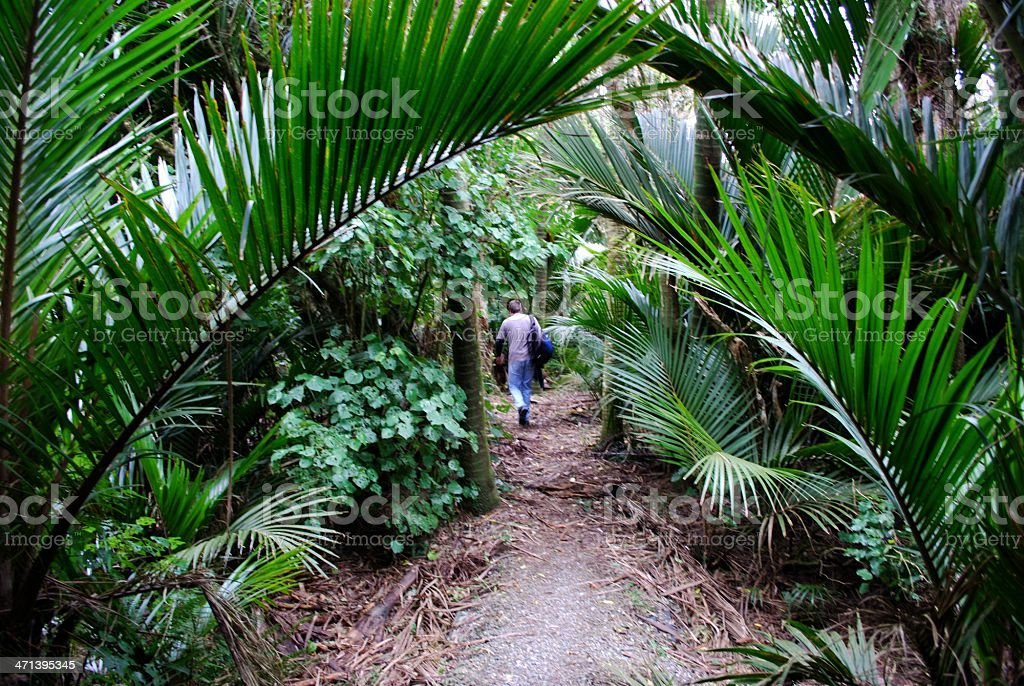 Lone Man disappears into the sub-tropical New Zealand Bush stock photo