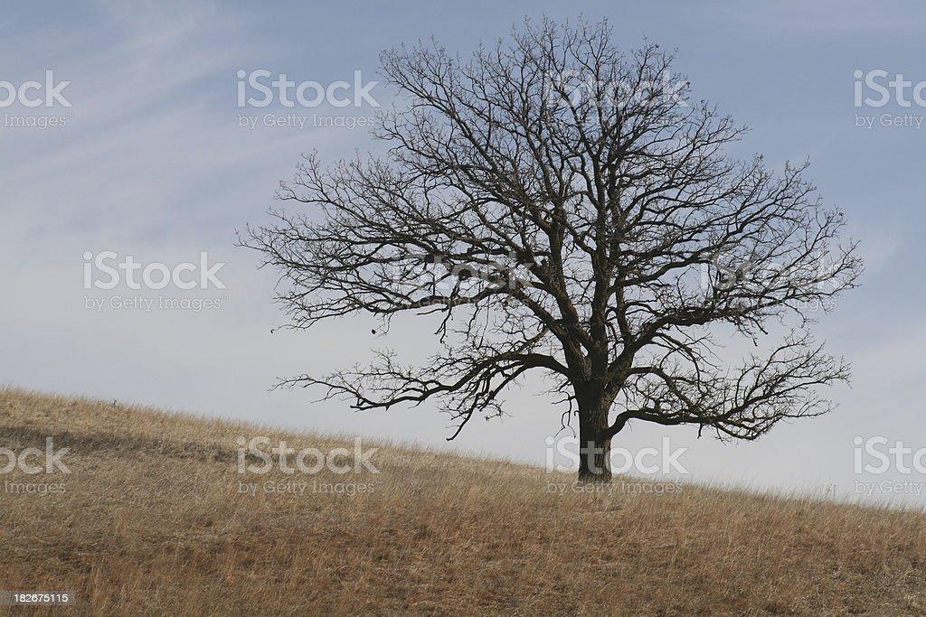 Lone Oak on Iowa Hillside royalty-free stock photo