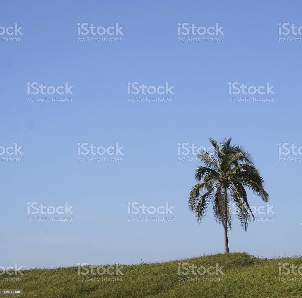 Lone Palm photo libre de droits