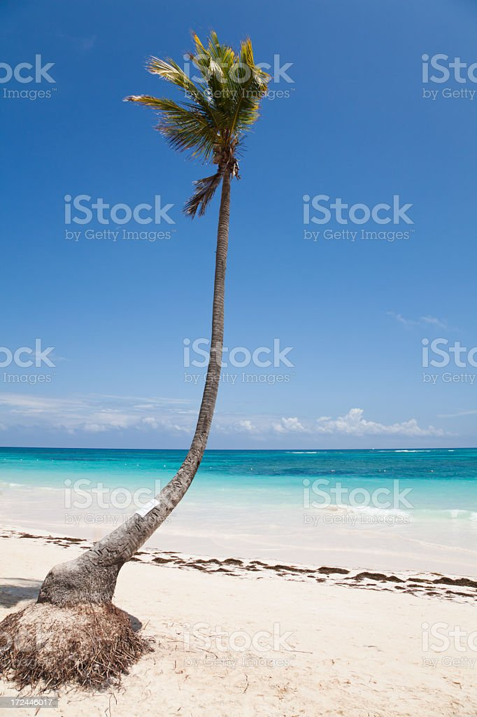 Lone palm tree in the Caribbean royalty-free stock photo