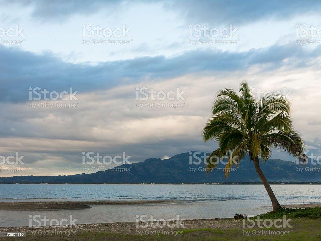 Lone Palm tree on a beach on cloudy day, Fiji stock photo