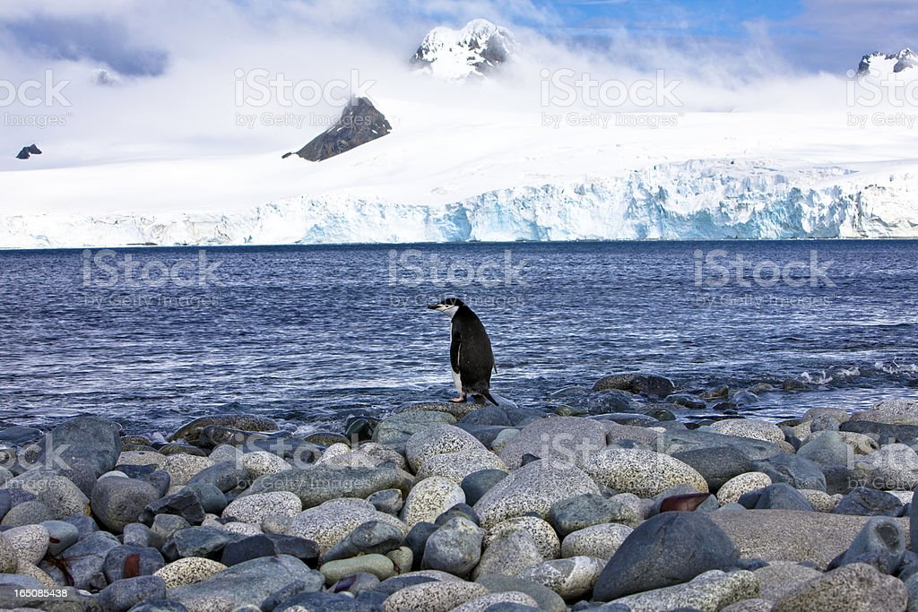 Lone penguin against ocean and glacier backdrop in Antarctica stock photo