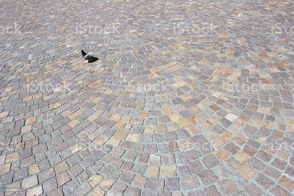 lone pigeon on cobblestone in Heidelberg Germany royalty-free stock photo