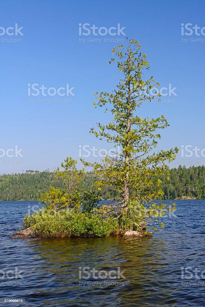 Lone Pine on Wilderness Lake stock photo
