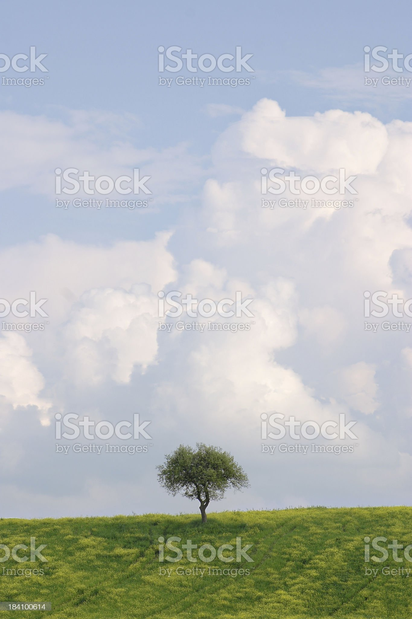 Lone Pine royalty-free stock photo