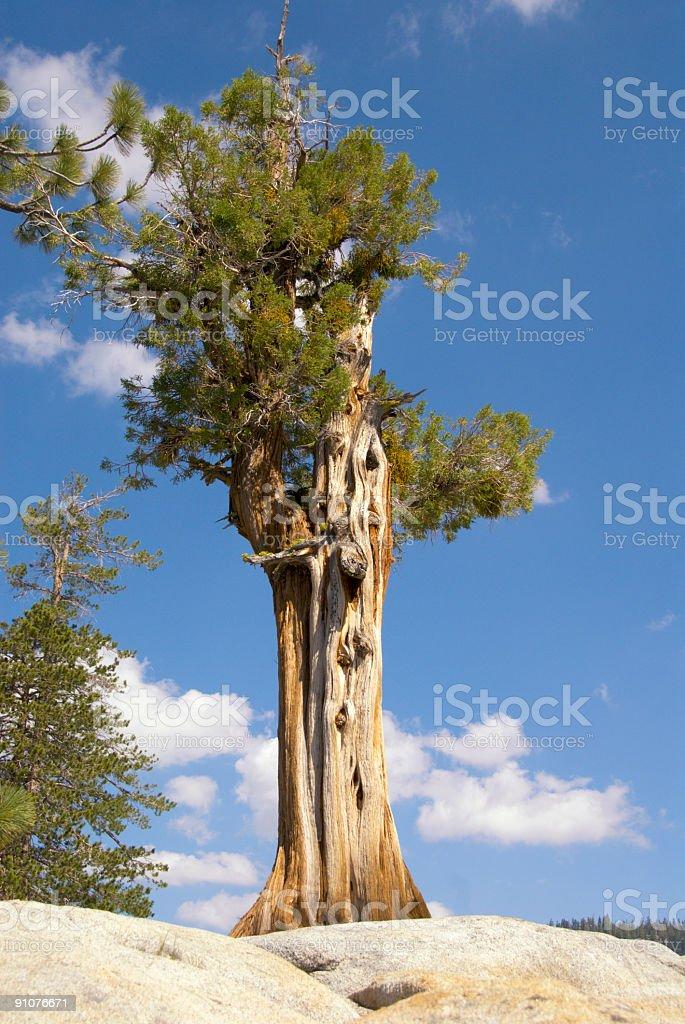 Lone Pine Tioga Pass stock photo