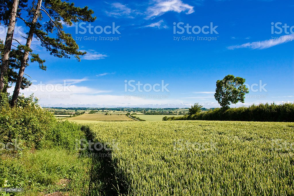 Lone Pines on Hill stock photo