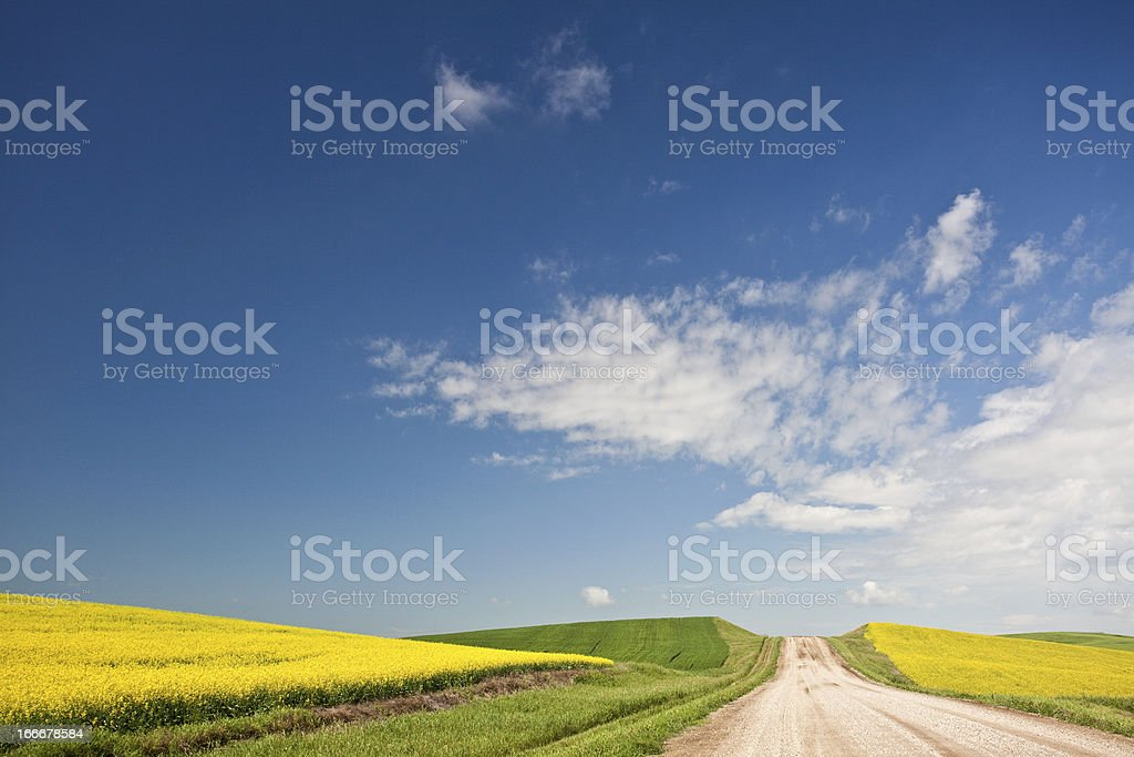 Lone road through the fields of Canola stock photo