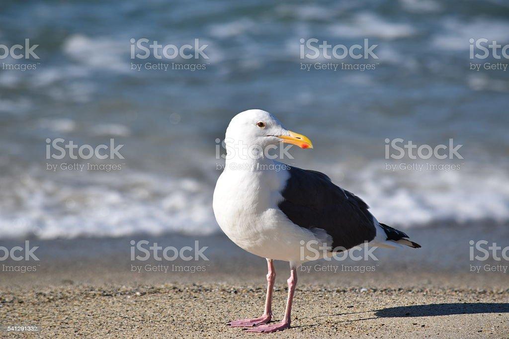 Lone seagull standing near an ocean beach. stock photo