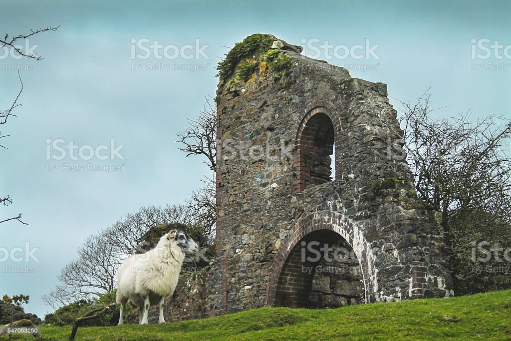 Lone Sheep At The Mine stock photo