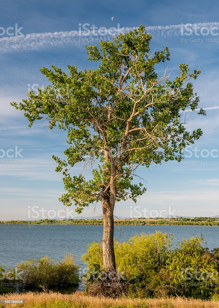 Lone single tree with a half moon near a lake stock photo