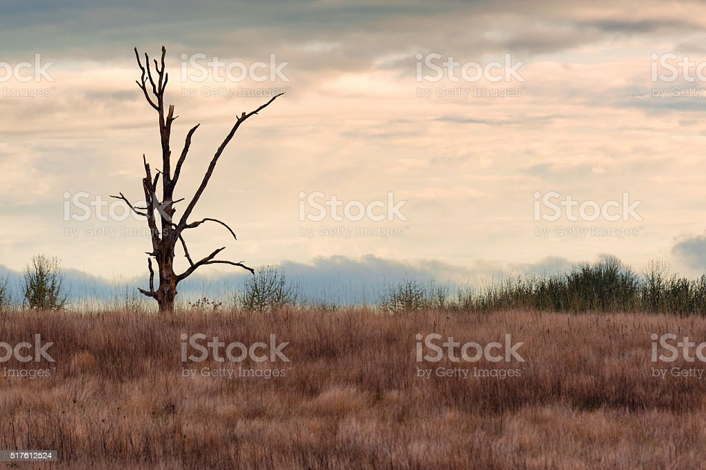 Lone snag in grasslands under cloudy skies stock photo