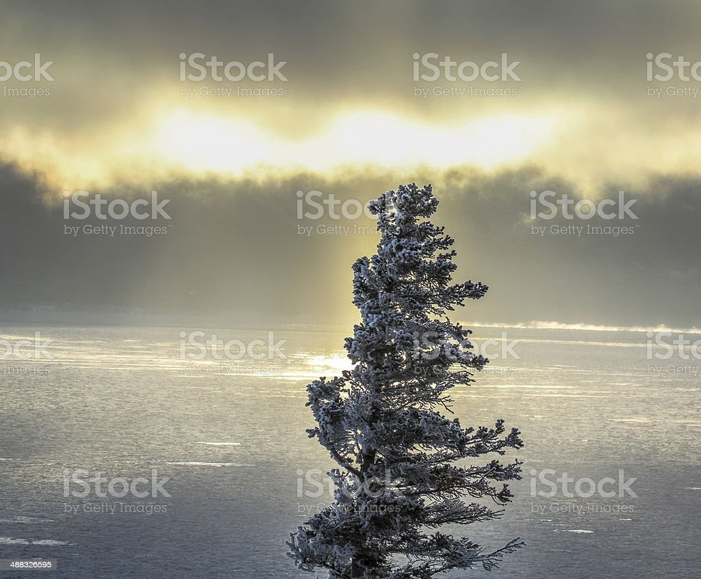 Lone Spruce royalty-free stock photo