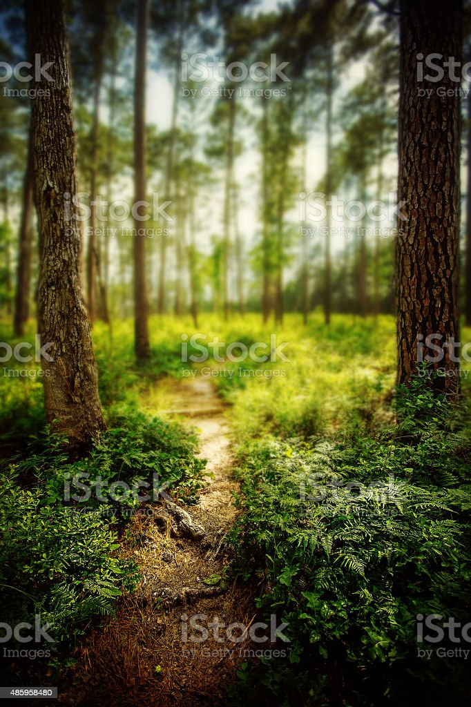 Lone Star hiking trail stock photo
