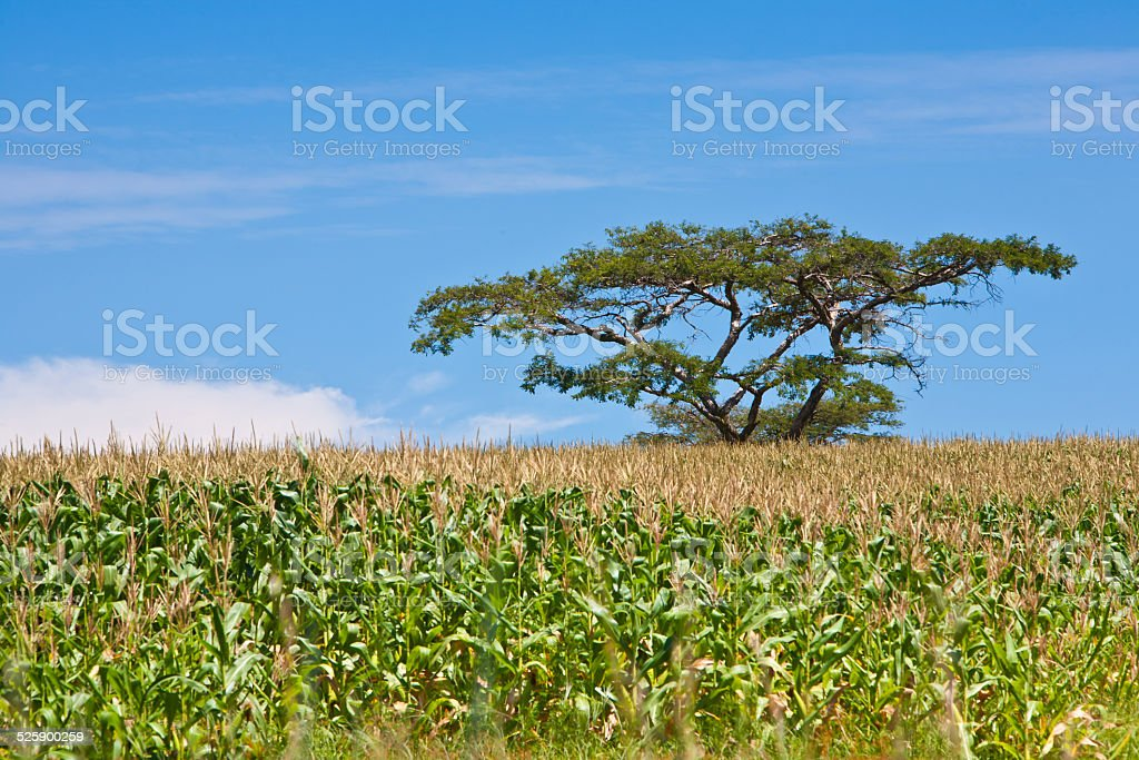 Lone survivor stock photo