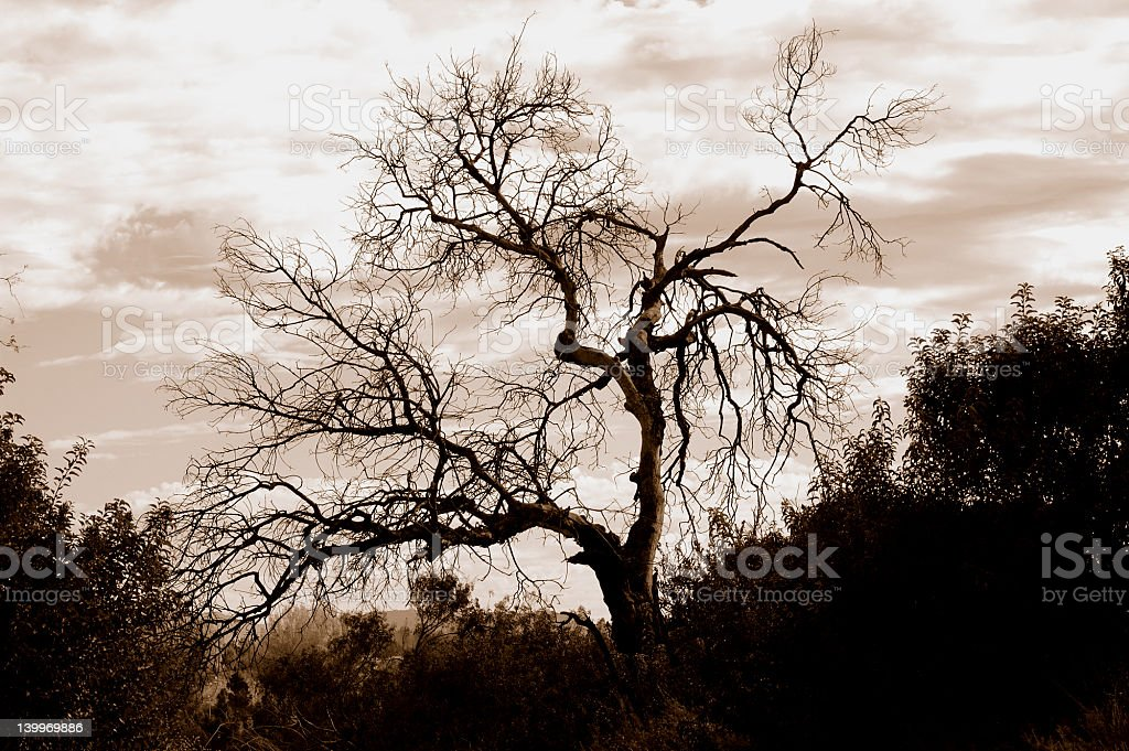 Lone tree against cloudy sky in sepia royalty-free stock photo