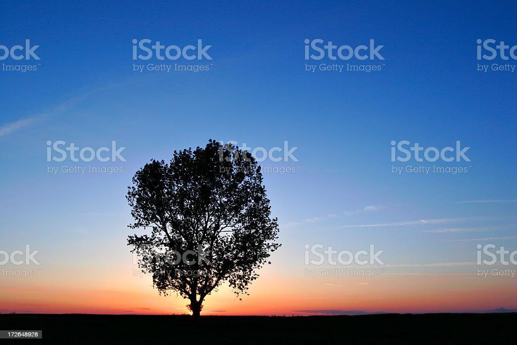 Lone Tree Against Night Sky royalty-free stock photo