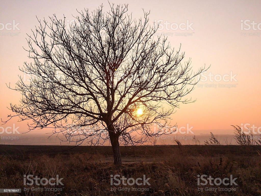 Lone tree against sunset sky stock photo