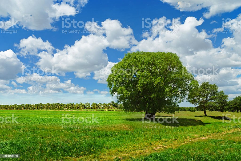 lone tree among a cloudscape royalty-free stock photo