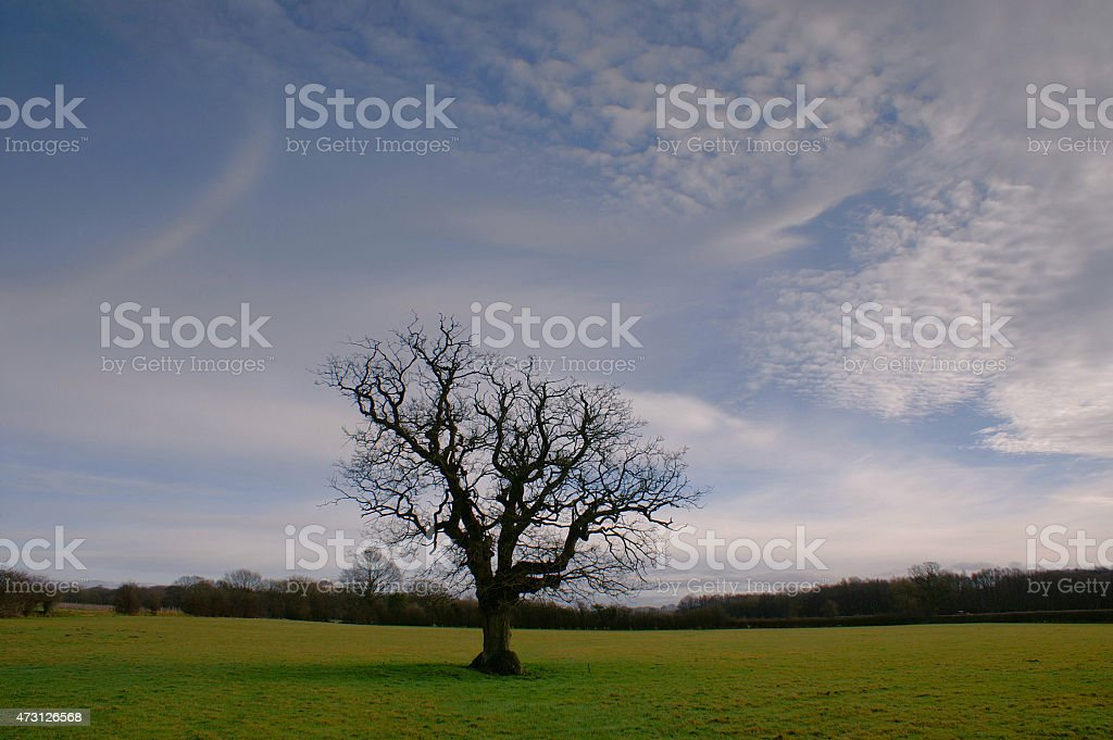 Lone tree and blue sky with clouds stock photo