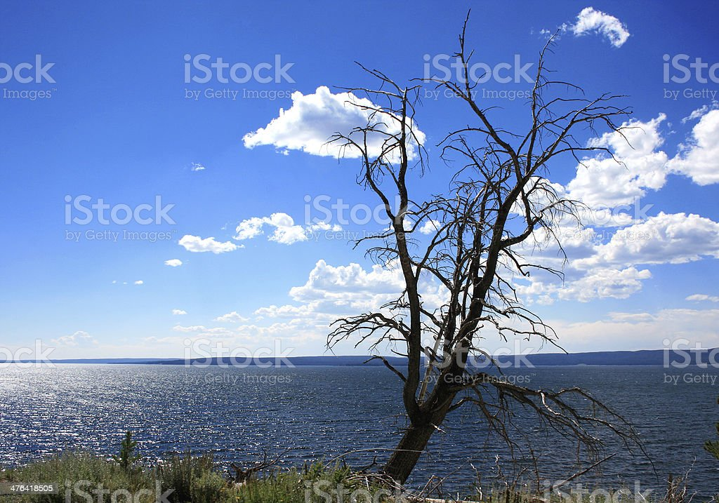 Lone Tree and Clouds Leaves royalty-free stock photo