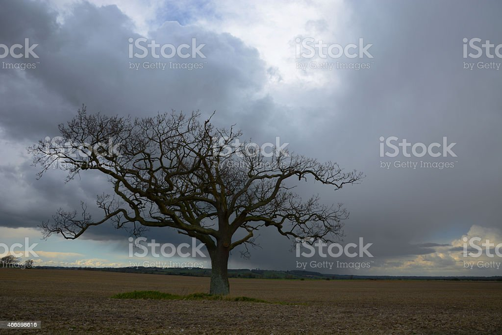 Lone tree and stormy sky stock photo