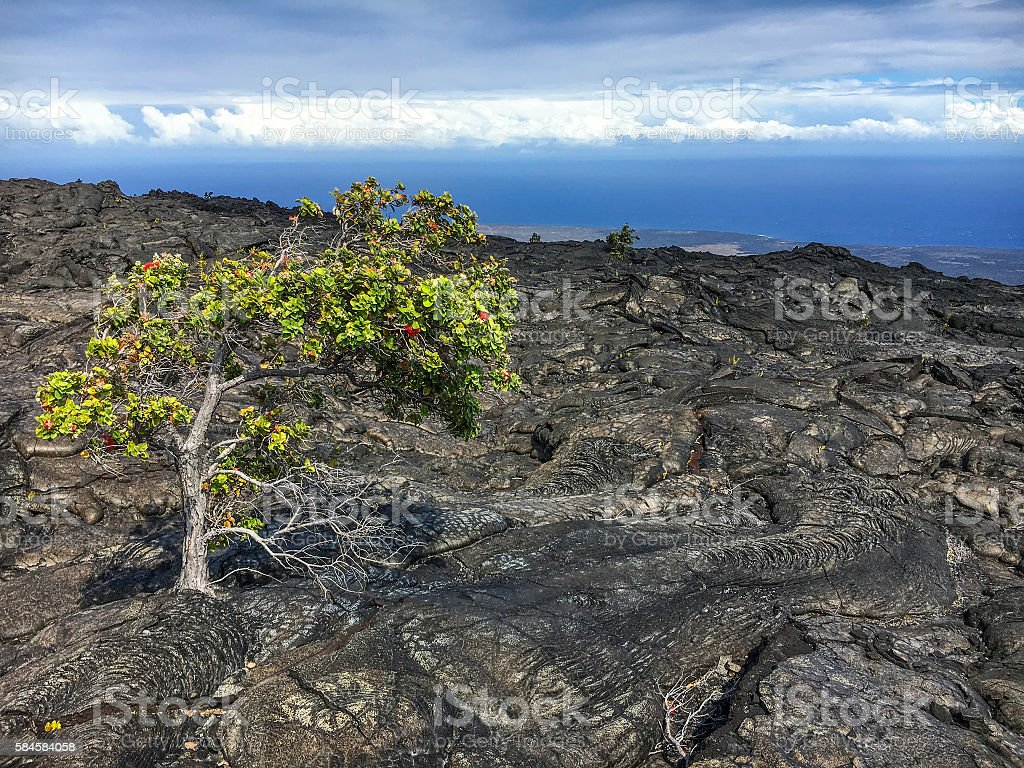 Lone tree and volcanic landscape stock photo