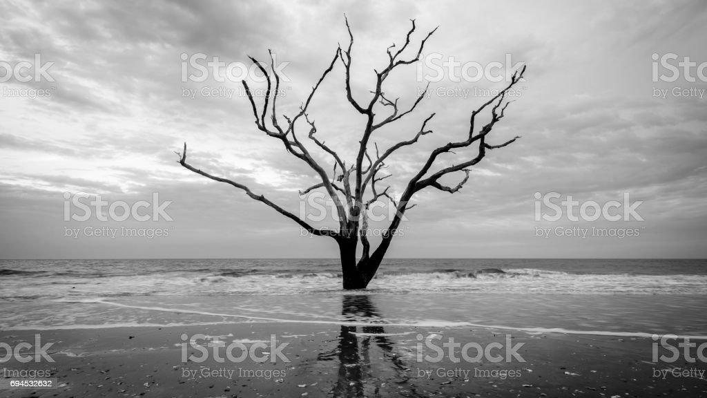 Lone tree at Boneyard Beach stock photo