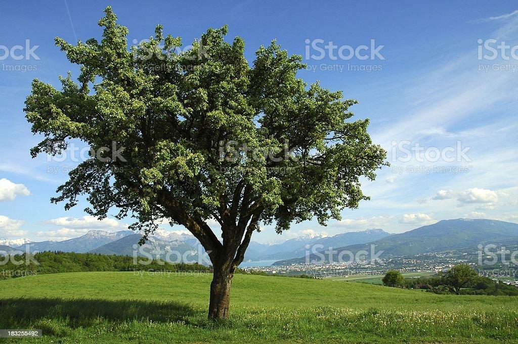 lone tree at spring royalty-free stock photo