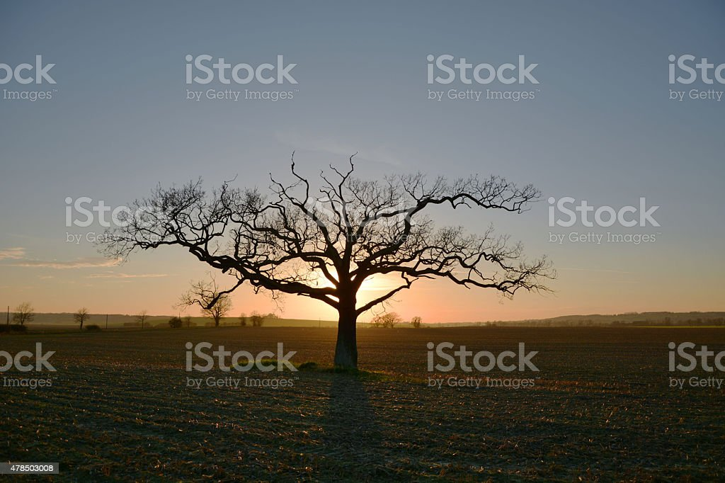 Lone tree at sunset in England stock photo