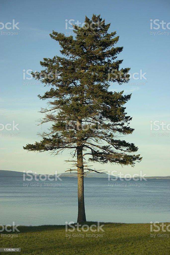 Lone Tree at Sunset royalty-free stock photo