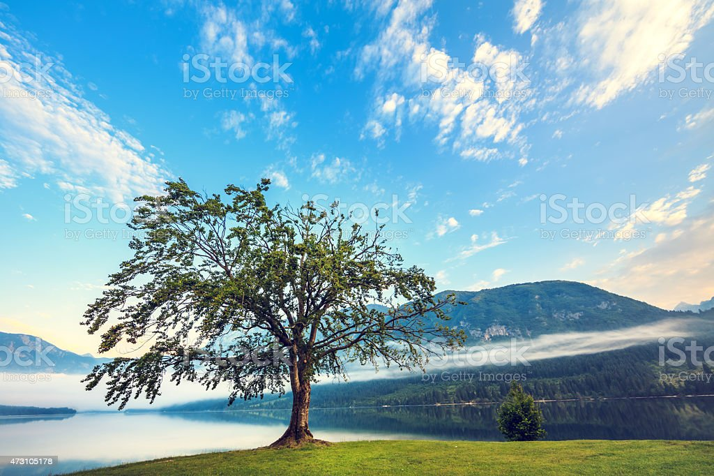 Lone Tree By The Lake At Sunrise stock photo