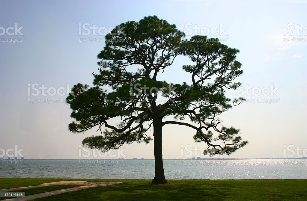 Lone Tree by the Sea royalty-free stock photo