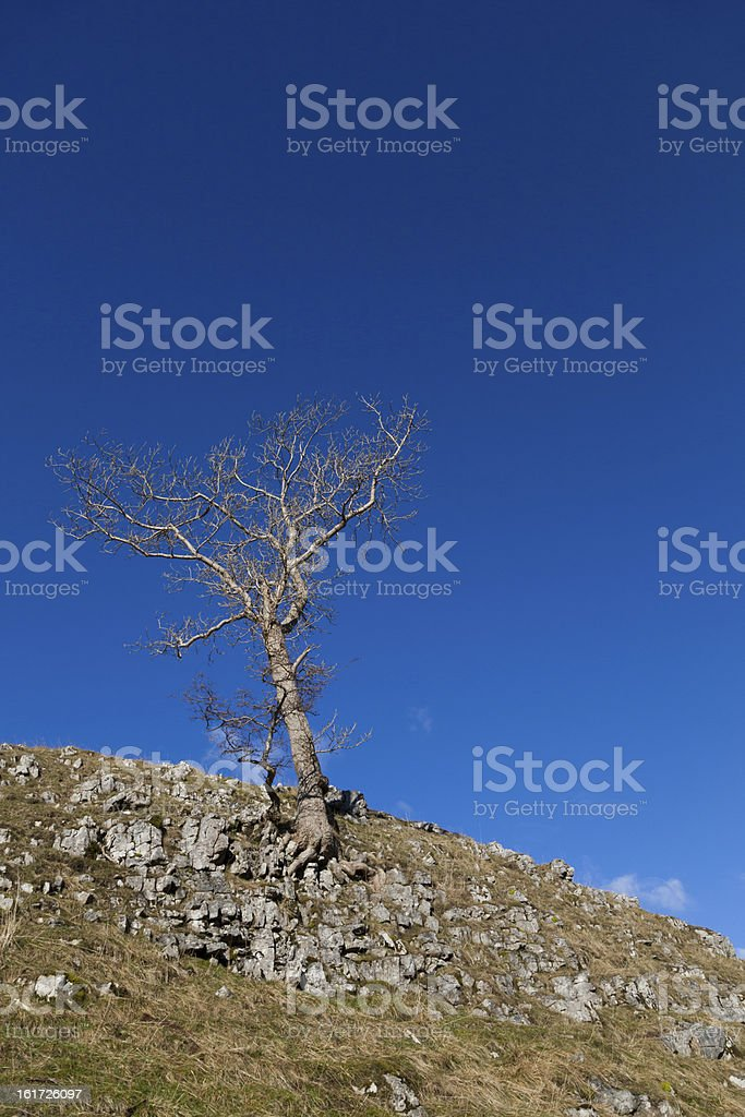 Lone tree clinging to the hillside against a blue sky stock photo