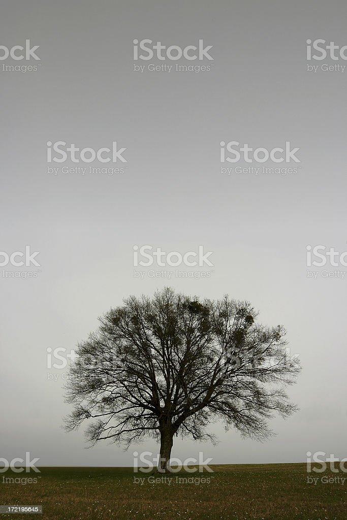 Lone Tree - Dusk in Winter royalty-free stock photo