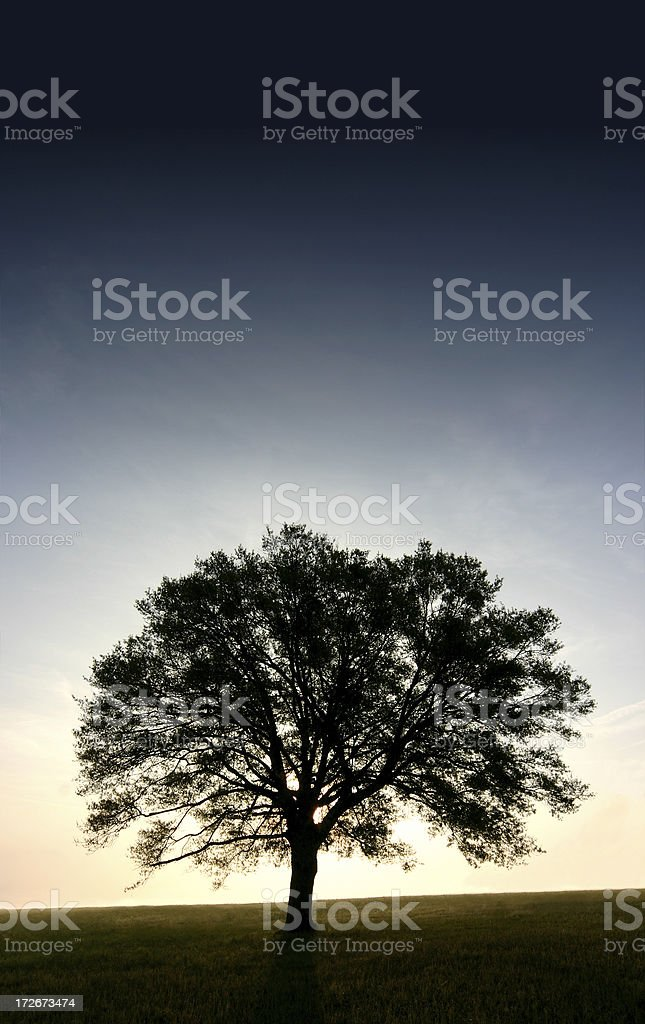 Lone Tree - Early Dawn royalty-free stock photo