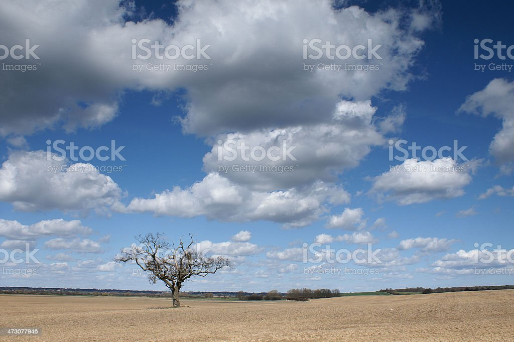 Lone tree, English Spring countryside stock photo