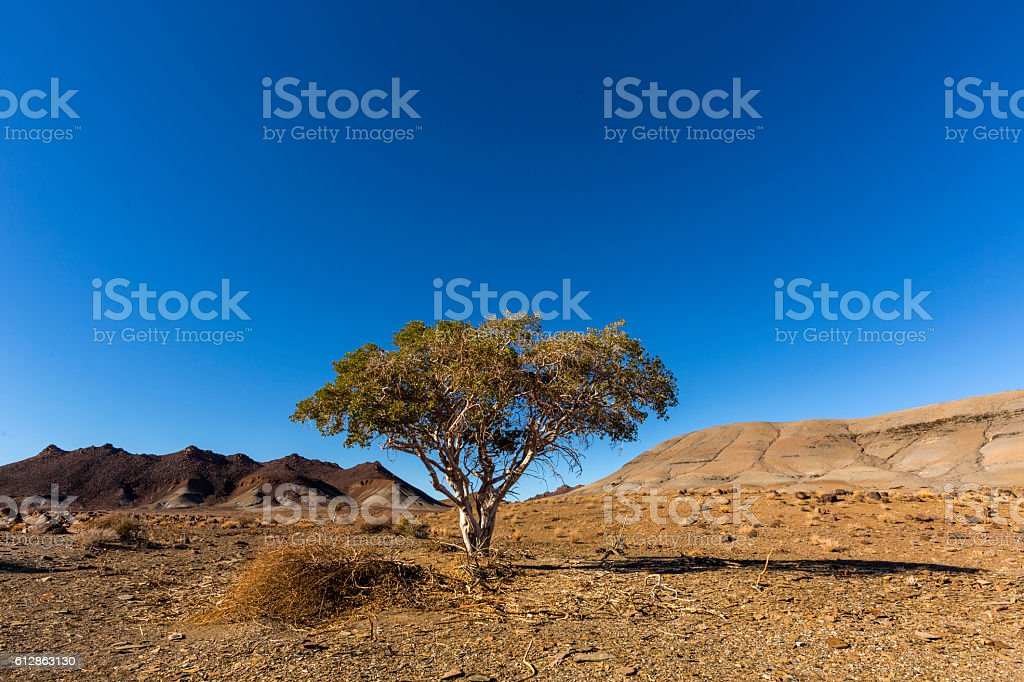 Lone tree in a barren land stock photo