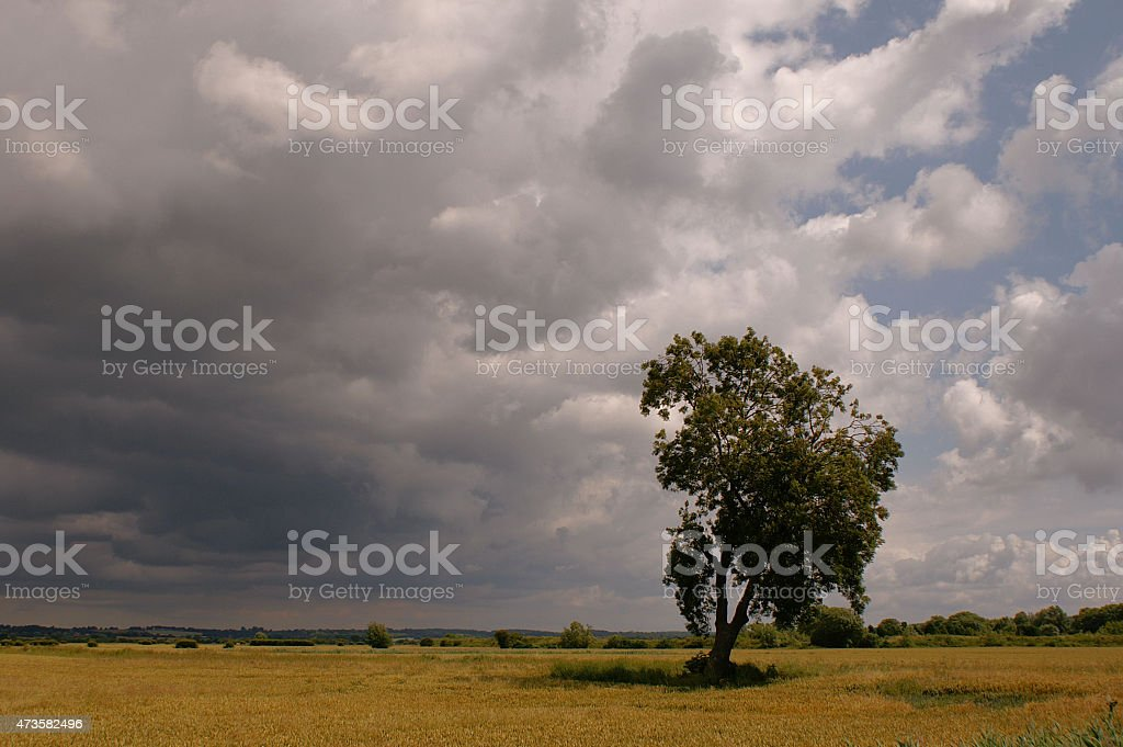Lone tree in an early summer storm stock photo