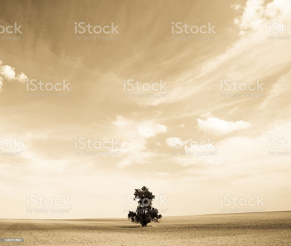 Lone Tree in Bare Field, Sepia Toned royalty-free stock photo