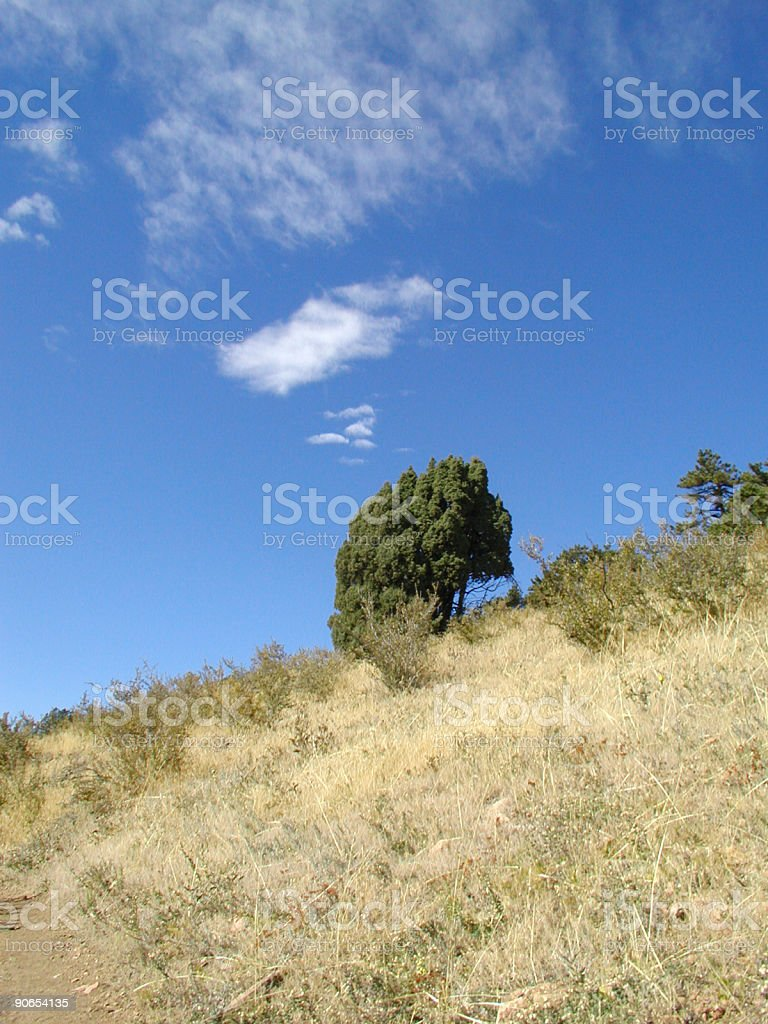 Lone Tree in Clear sky stock photo