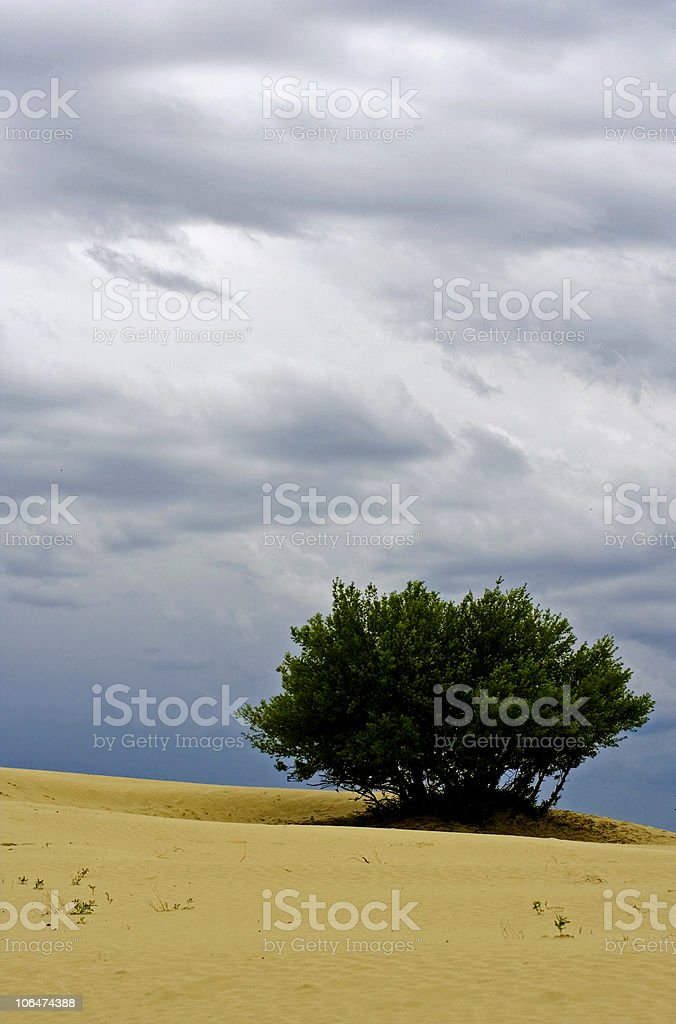 Lone tree in desert royalty-free stock photo