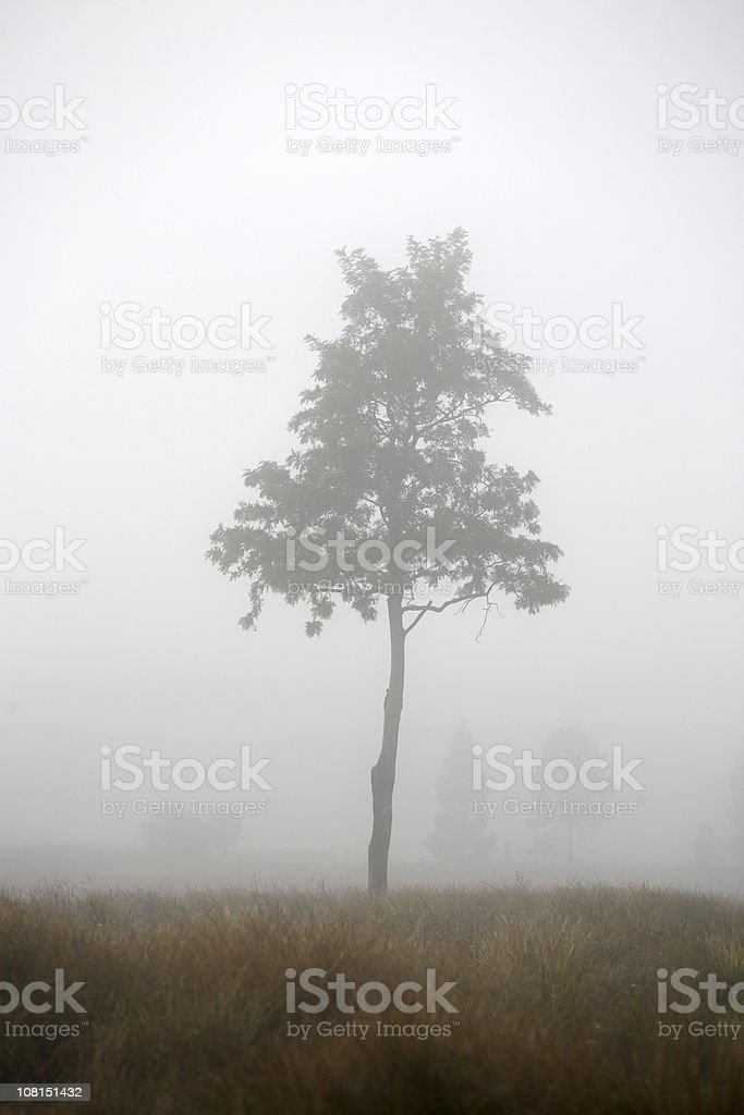 Lone Tree in Field During Foggy Day royalty-free stock photo