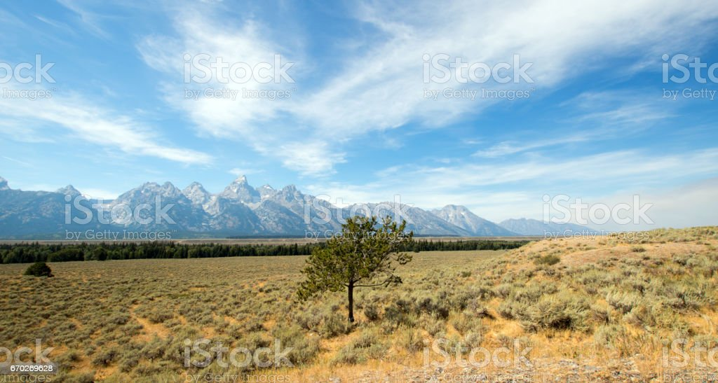 Lone Tree in front Grand Tetons Peaks in Wyoming USA stock photo